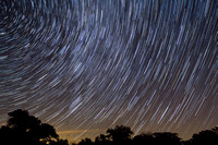 Star Trails Over Trees